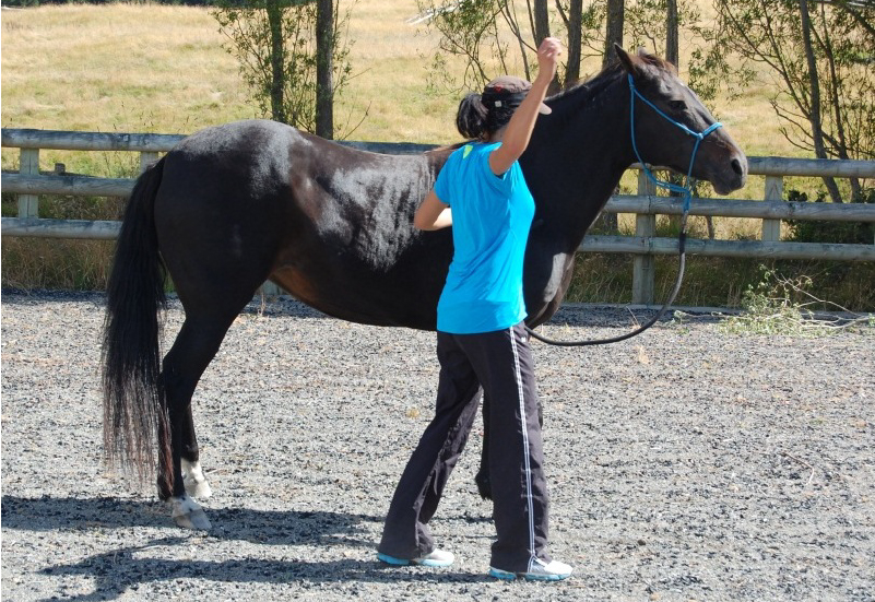 Learn the ancient art of horse whispering.
